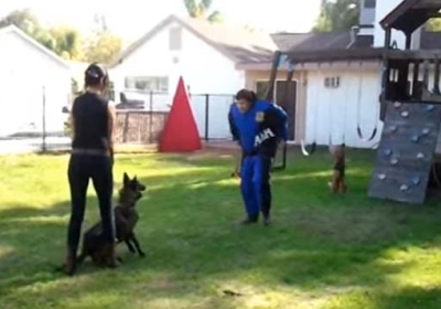 Protection and Obedience Dog Training