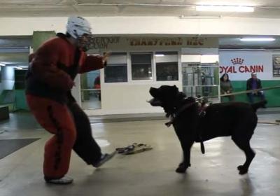 K9 Police Dog Training – Bodyguard Dog Training – How to Train Your Dog