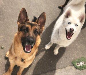 Dog Socialization Class