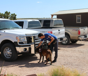 Organization, deployment, and operation of a guard dog kennel