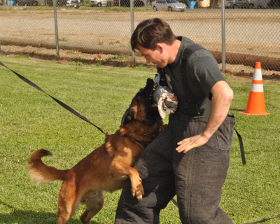 dog_training_los_angeles_sacramento_27