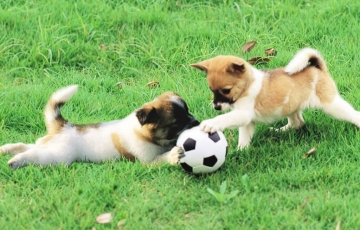 The training of the puppy