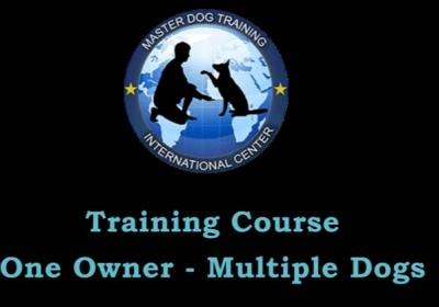 Master Dog Training – One Owner – Multiple Dogs – Dog Training Classes