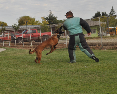 dog_training_los_angeles_sacramento_23