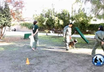 Master Dog Training Instructional DVD's