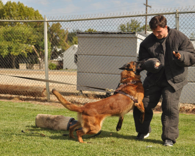 dog_training_los_angeles_sacramento_26