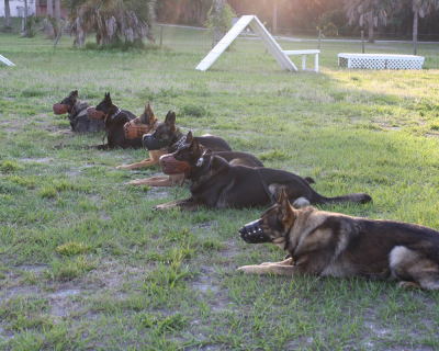 dog_training_los_angeles_sarasota_6