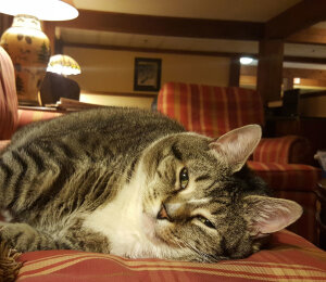 Cat & small animal hotel