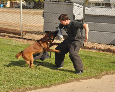 dog_training_los_angeles_sacramento_30