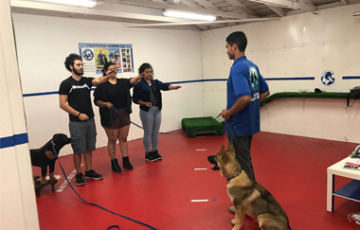 The school for the training of the dog trainers