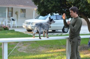 Your dog will learn voice and gesture commands at Master Dog Training's boot camp