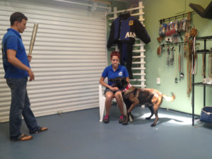 Protection Dog Training