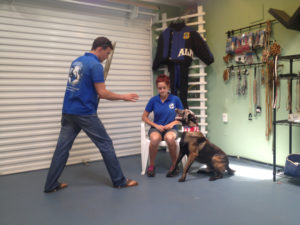 Protection Dog Training offers a variety of benefits for dogs