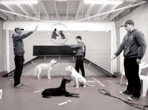 Maxim Basyro - Dog Trainer