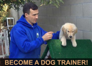 Dog Trainer Course