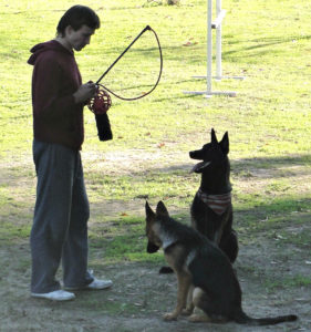 Dog Training Camp - Los Angeles, CA - Master Dog Training Center