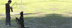 Camp Dog Training - Los Angeles, CA - Master Dog Training