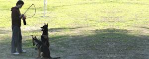 Camp Dog Training - Los Angeles, CA - Master Dog Training