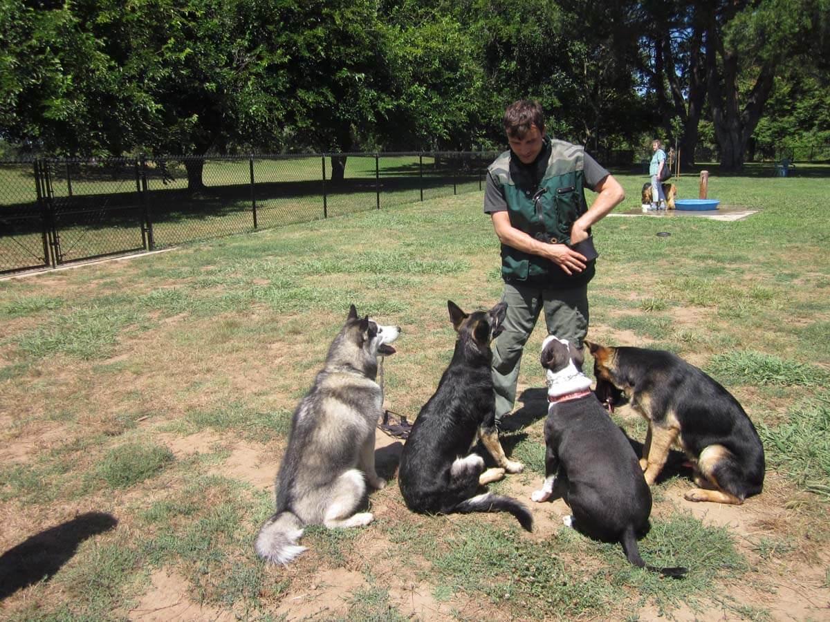 Train Your Dog Group Dog Training Classes Www Masterdog