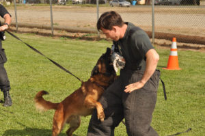 Police Dog Training - K9 Dog Training