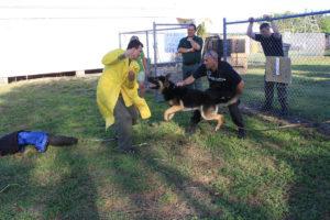 Dog Training Demonstration - Los Angeles