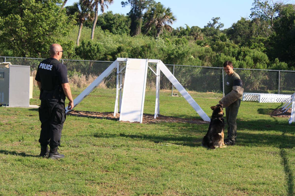 Protection Training For Dogs Los Angeles