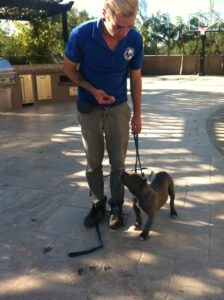 Nebti - Puppy Obedience Training