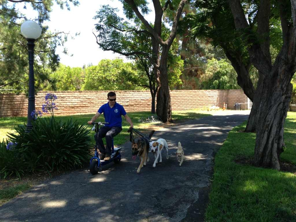 Training a Dog & enjoy weekends at the park