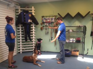 After completing the Obedience Dog Training Course, you should be able to use both voice and gesture commands to control your dog.