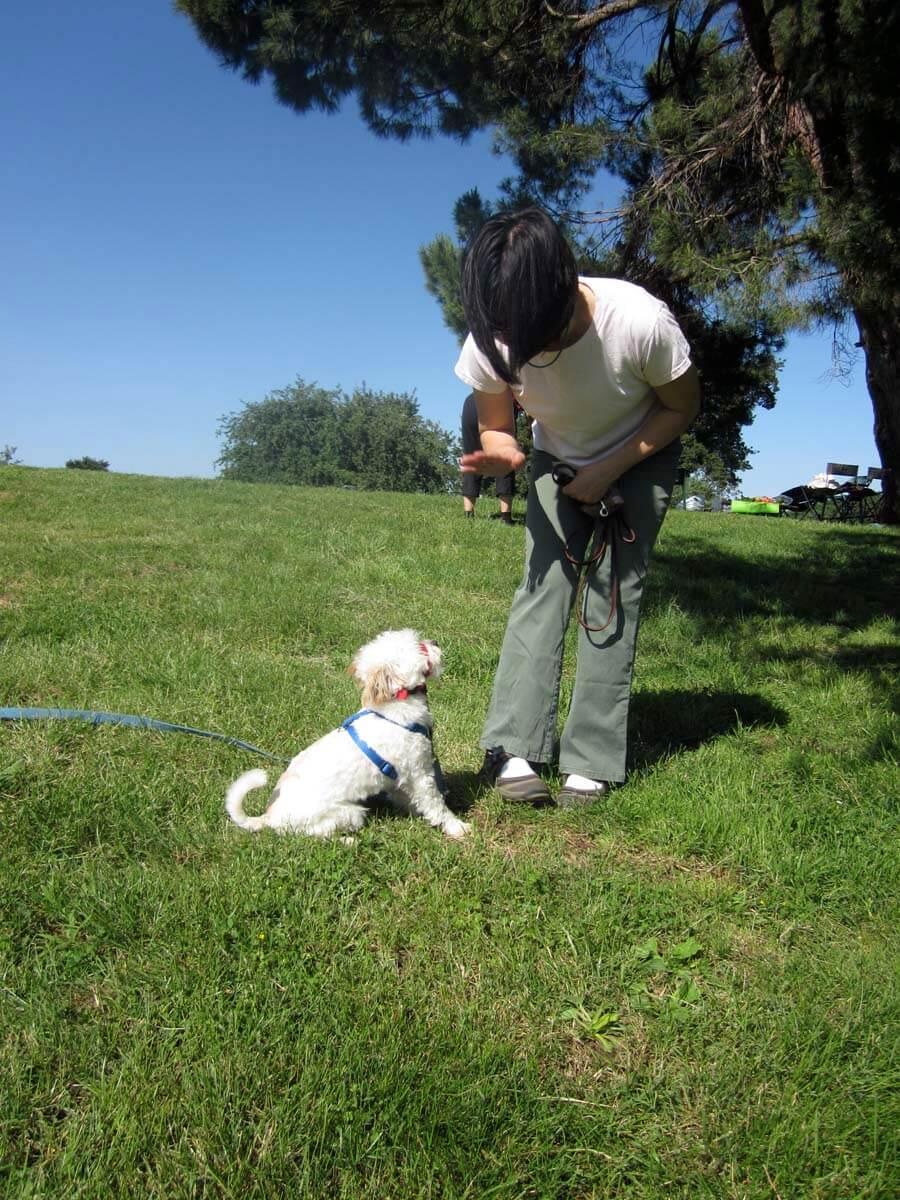 Dog Training Boot Camp Los Angeles
