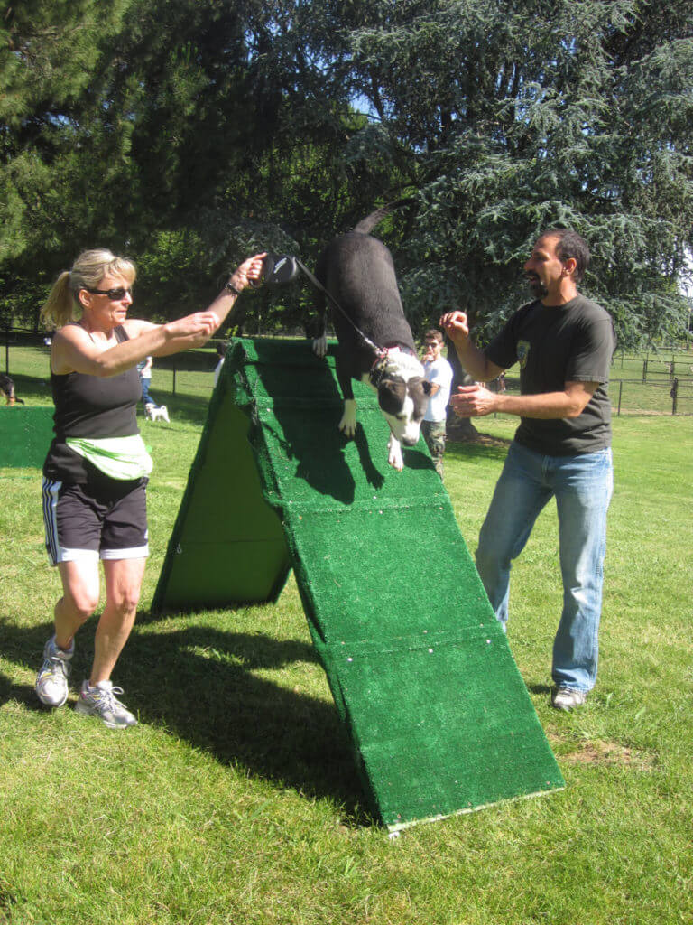 Agility Dog Training Classes