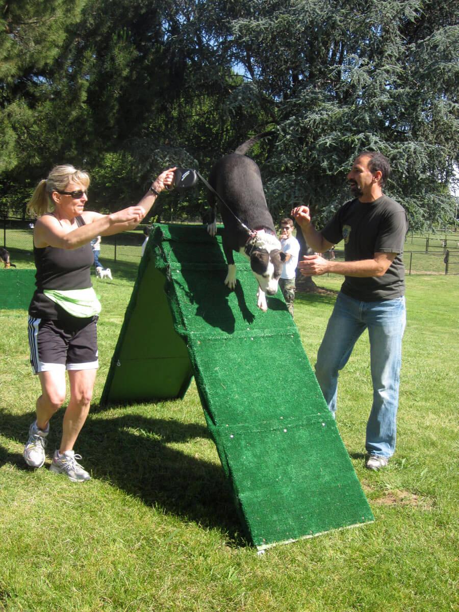 Agility Dog Training Classes - Master Dog Training