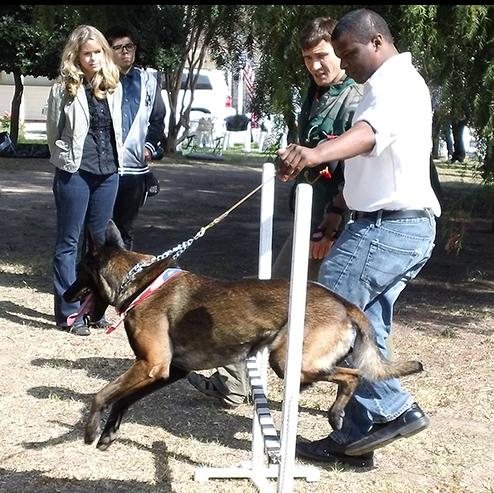 Dog Training Workshop
