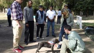 Master Dog Training Socialization