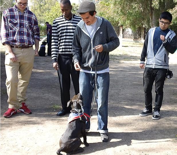 Dog Training Open House