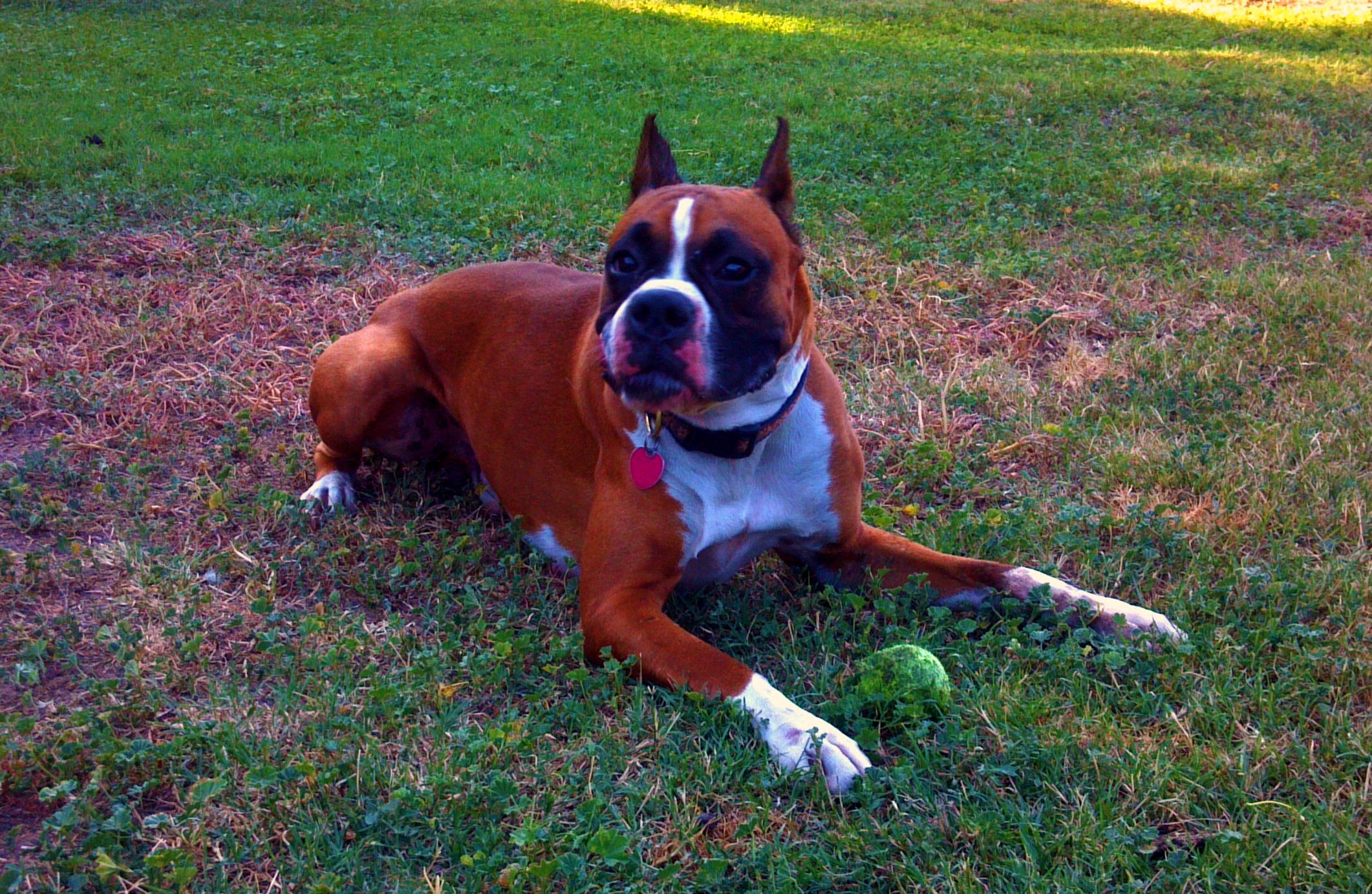 Beverly Hills Master Dog Training