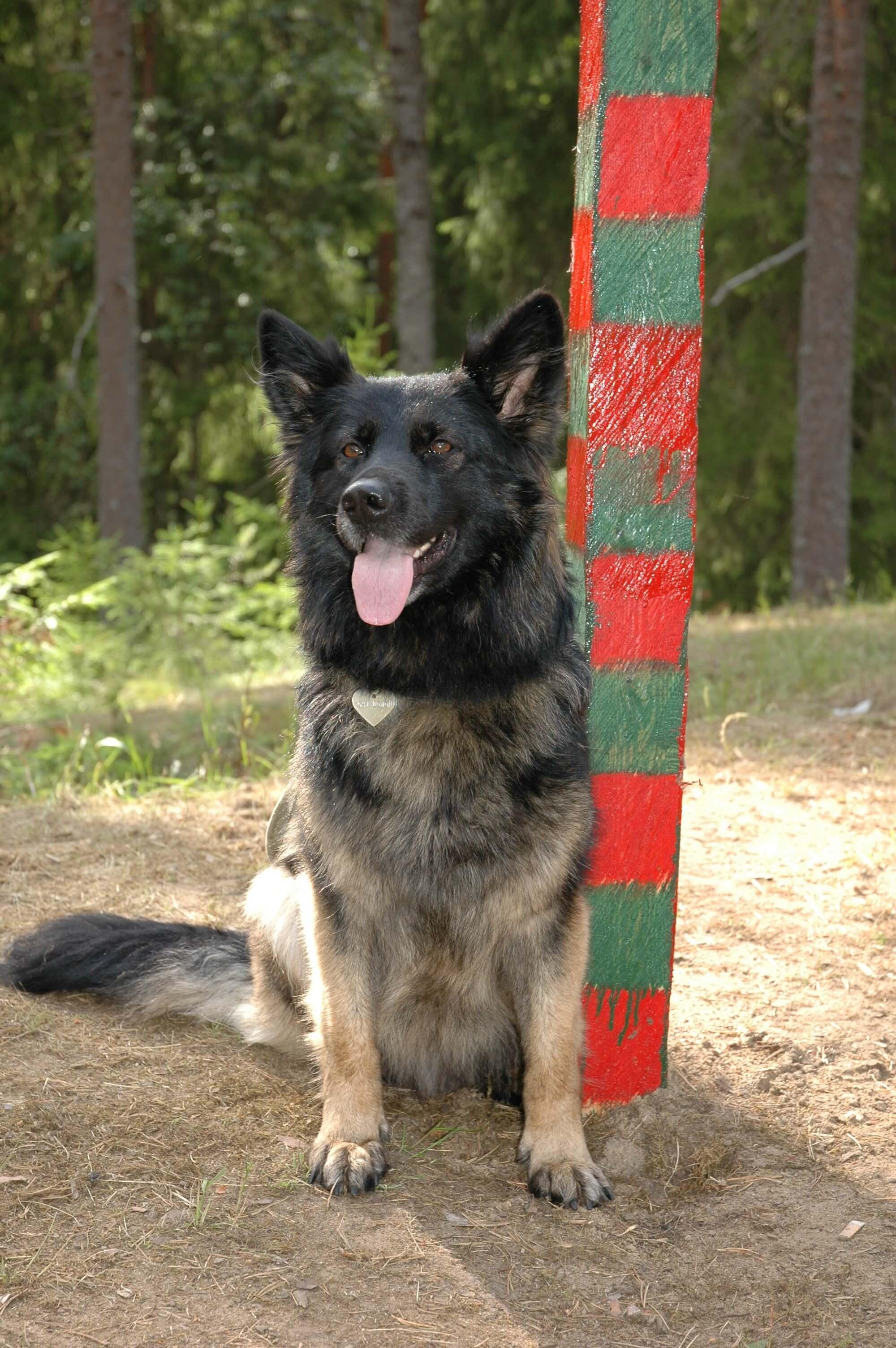Aggressive Dog Training - Call 818-290-9411 / 818-857-8754