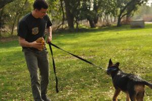 Training aggressive dog at the dogpark