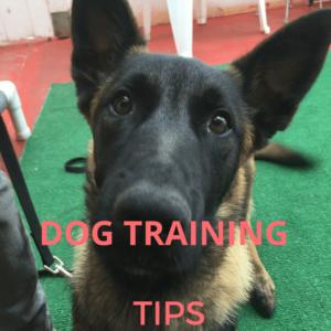 DOG TRAINING-2