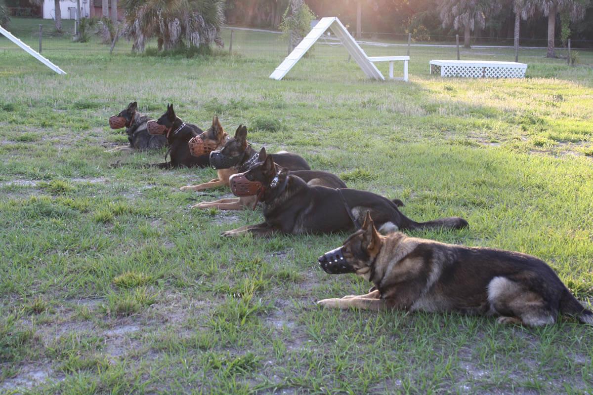 Protection Dog Training Los Angeles