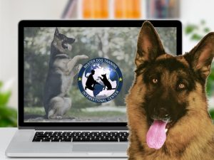 The online school for the dog trainers
