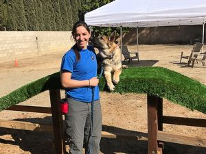 The training of dogs in Orange County