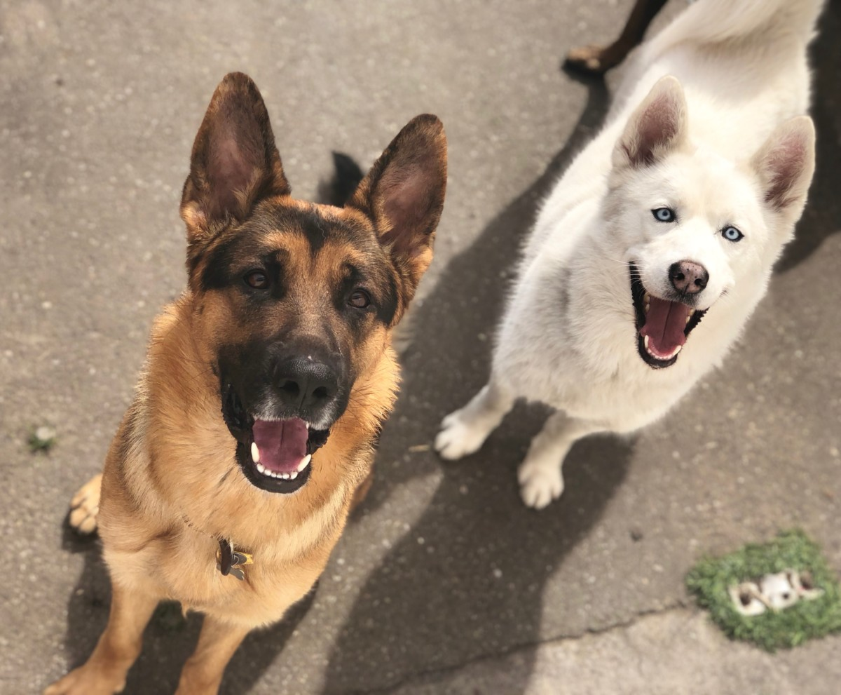 All dogs need to be socialized - The Royal Dog Academy