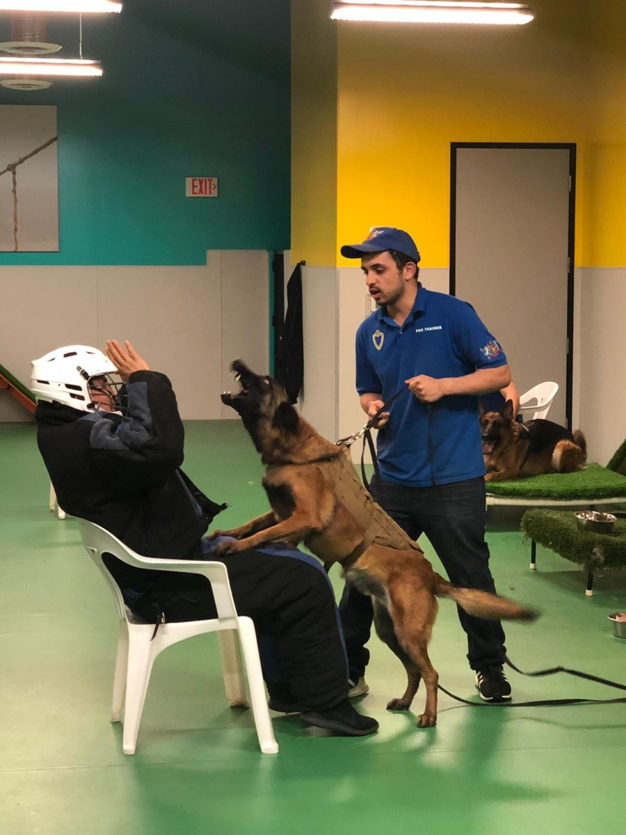 Adrenaline Show Royal Dog Academy